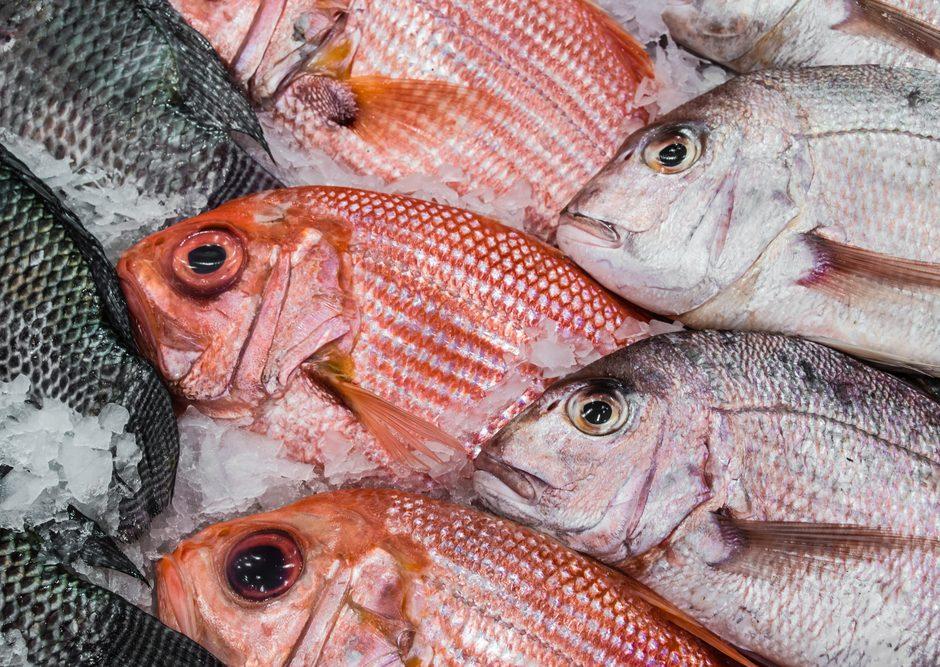 Waspada Bahaya Formalin Pada Ikan Ini Dia Cara Memilih Ikan Segar Tanpa Pengawet Happyfresh