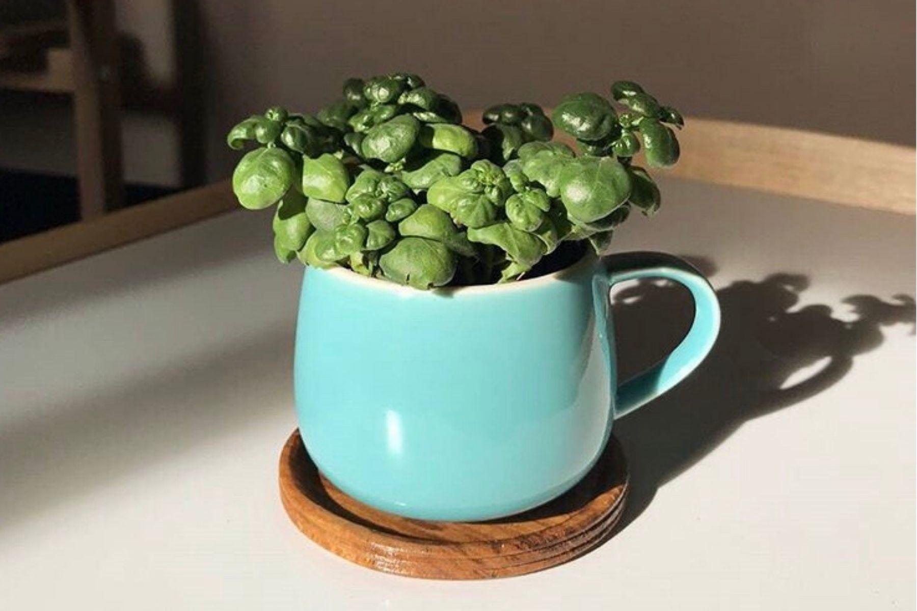 HappyFresh_10_Indoor_Plants_In_Condo_Bathroom_Bubbles
