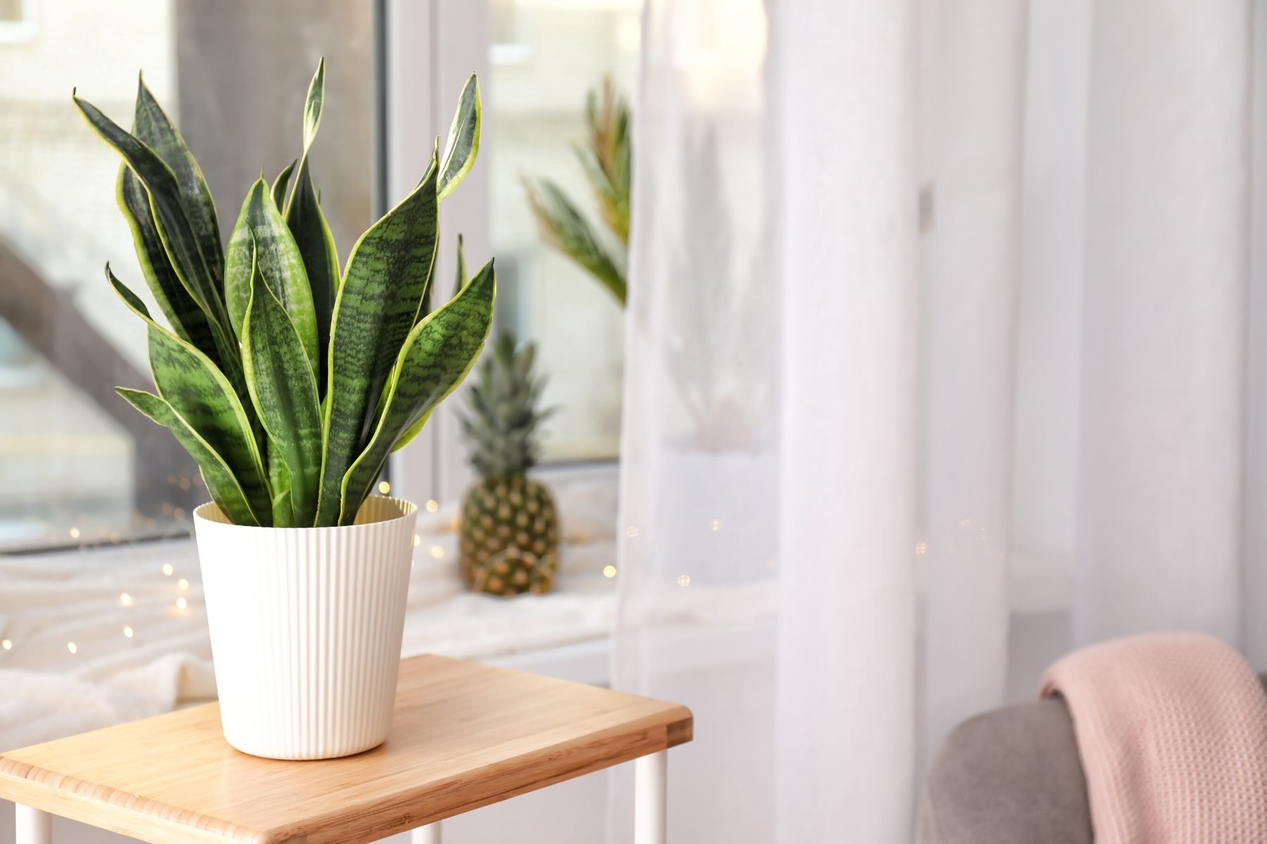 HappyFresh_10_Indoor_Plants_In_Condo_Snake_Plant