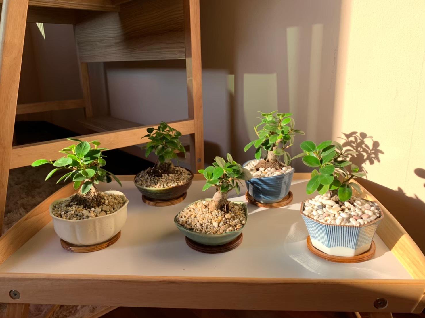 HappyFresh_10_Indoor_Plants_In_Condo
