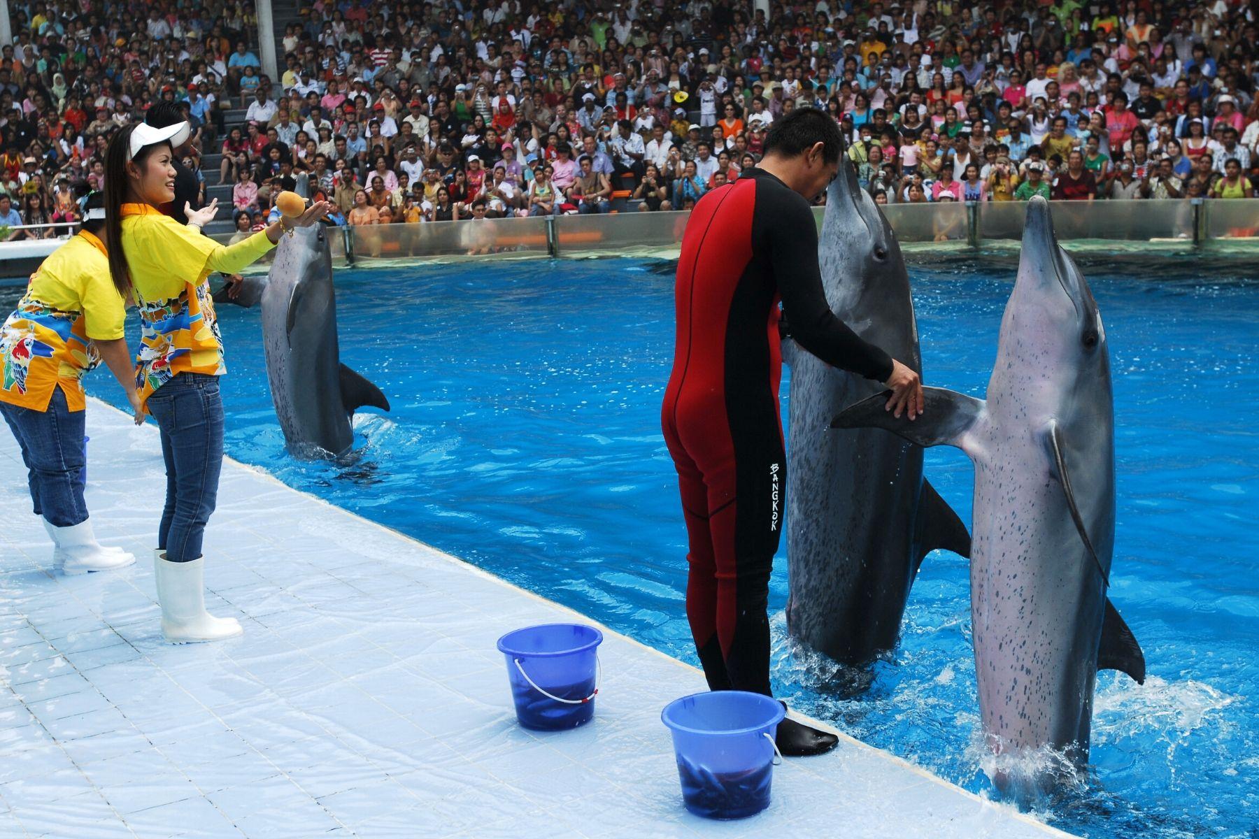HappyFresh_One_Day_Trip_Near_Bangkok_Dolphin_Show