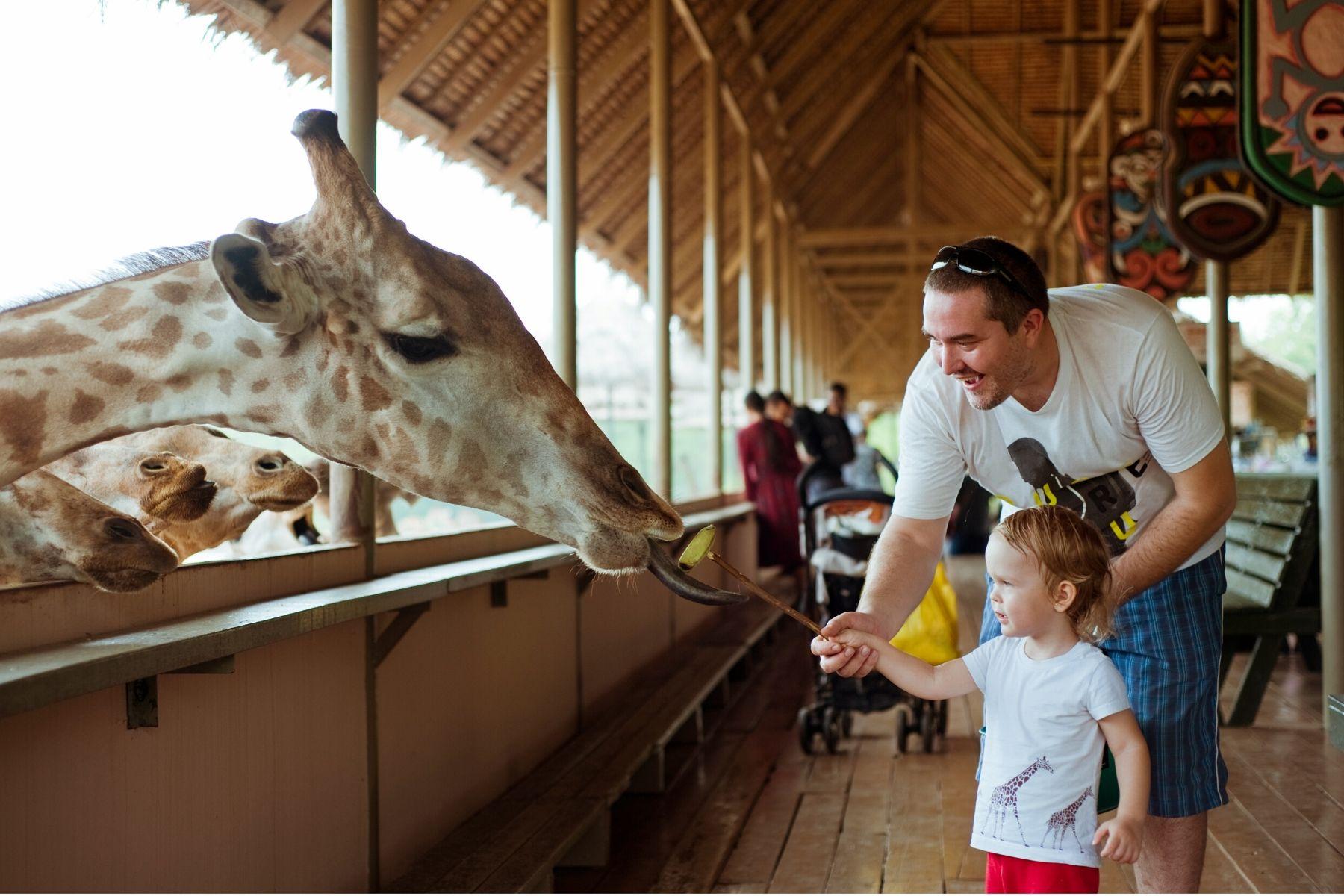 HappyFresh_One_Day_Near_Near_Bangkok_Feed_Giraffe