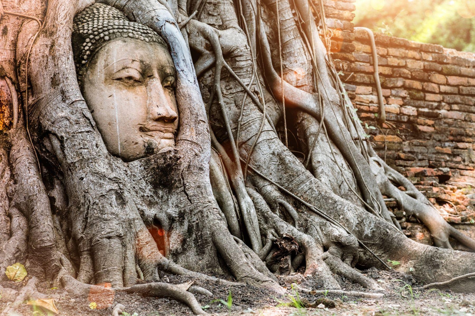 HappyFresh_One_Day_Trip_Near_Bangkok_Head_of_Bhuddha_Statue