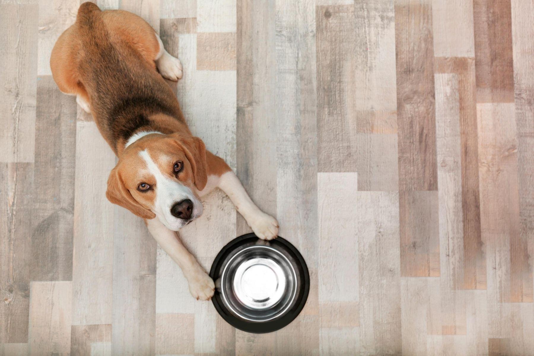 HappyFresh_DIY_Homemade_Dog_Food_Dog_Waiting