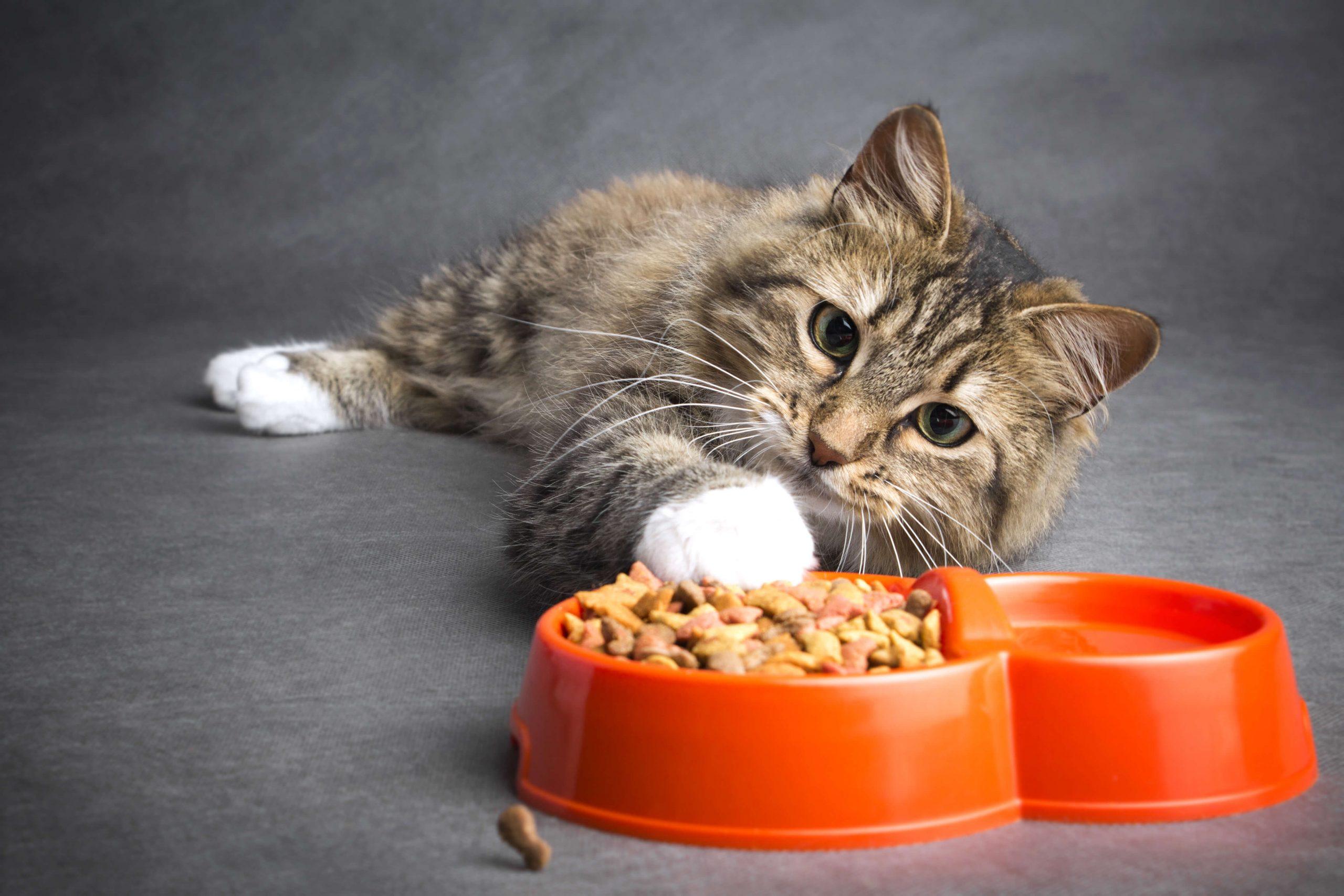 HappyFresh_Review_5_Brands_Of-Cat_Foods