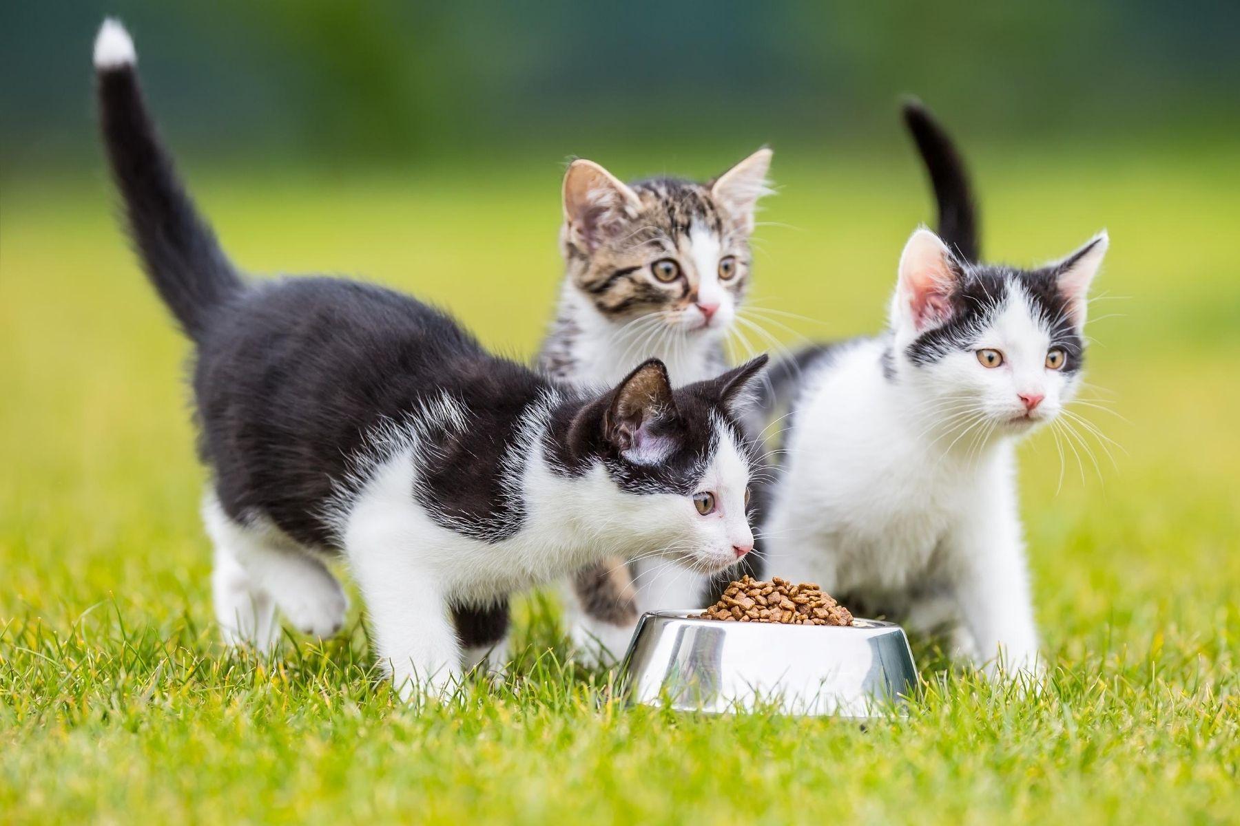 HappyFresh_Review_Cat_Foods