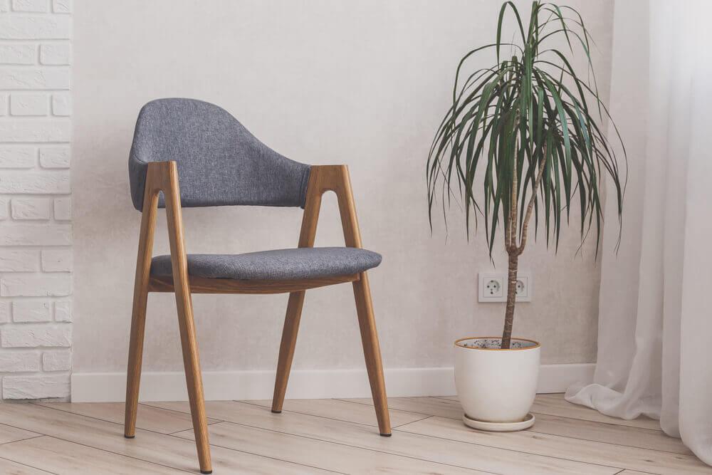 Dracaena plant indoors